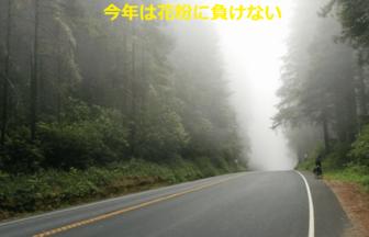 杉並木の写真